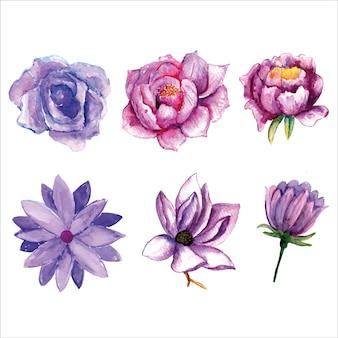 Ensemble de diverses aquarelles de fleurs violettes