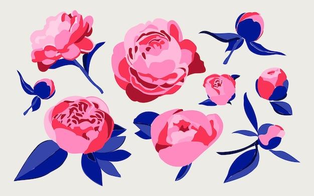 Ensemble de diverses pivoines ou roses décoratives isolées sur fond blanc concept botanique floral