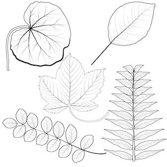 Ensemble de douze feuilles d'automne différentes isolées sur fond blanc