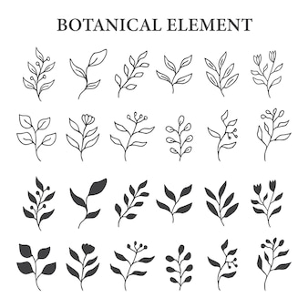 Ensemble d & # 39; élément botanique de feuille