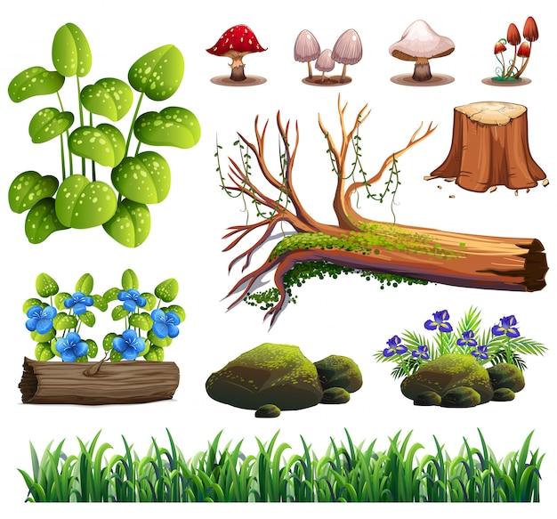 Un ensemble d'élément de la forêt