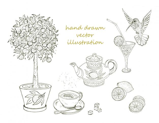 Ensemble d'éléments d'agrumes dessinés à la main