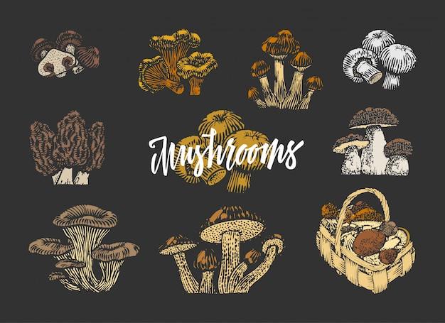 Ensemble d'éléments de champignons colorés
