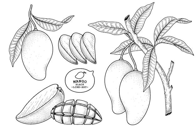 Ensemble d'éléments dessinés à la main de fruits mangue illustration botanique