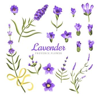 Ensemble d'éléments de fleurs de lavande. collection de fleurs de lavande