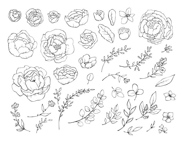 Ensemble d'éléments, de fleurs de pivoines et de feuilles. illustration.