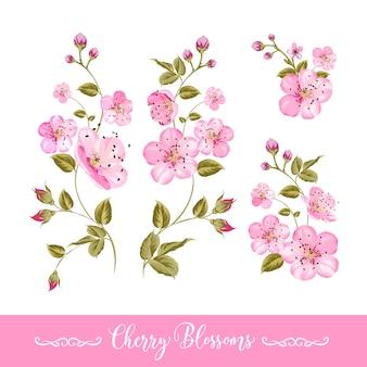 Ensemble d'éléments de fleurs de printemps