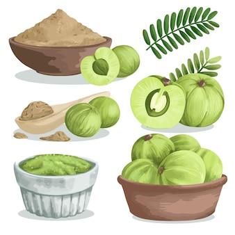 Ensemble d'éléments de fruits amla détaillés
