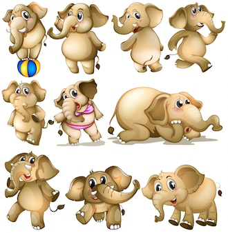 Ensemble d'éléphants