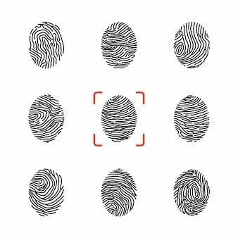 Ensemble d'empreintes digitales individuelles pour l'identification personnelle. illustrations vectorielles