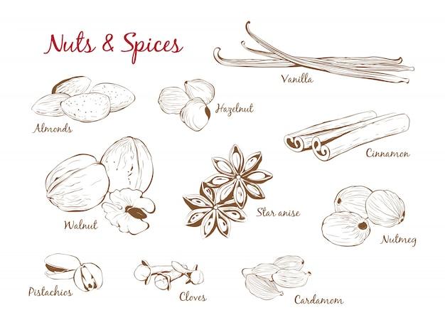 Ensemble d'épices et de noix dessiné à la main dans le style de contour. illustration vectorielle