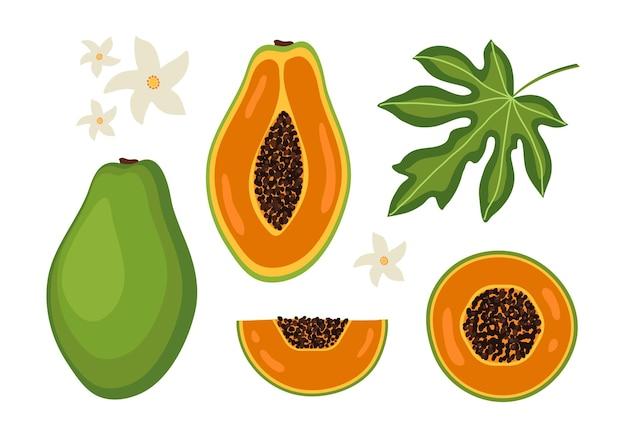 Ensemble exotique de feuilles de fleurs en tranches entières et moitié de papaye sur fond blanc
