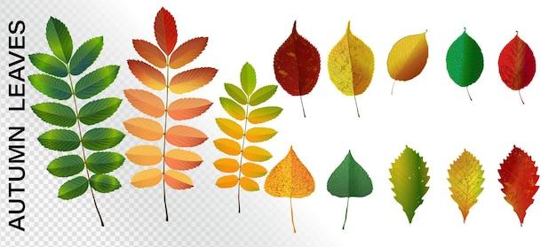 Ensemble de feuilles d'automne colorées. collection de feuilles d'automne réaliste de vecteur. illustration de feuilles d'érable, de chêne, de rowan jaune et rouge.