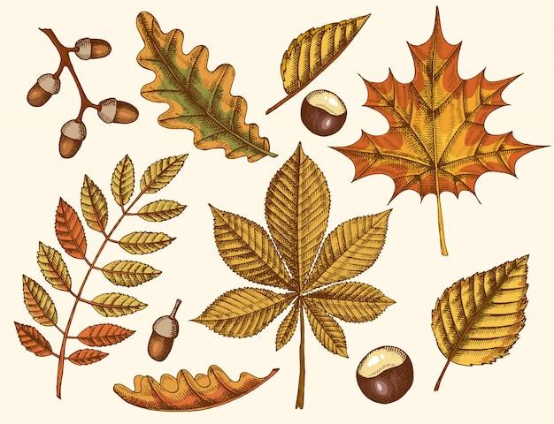 Ensemble de feuilles d'automne. feuilles dessinées à la main d'érable, bouleau, châtaignier, gland, frêne, chêne. esquisser. ancien