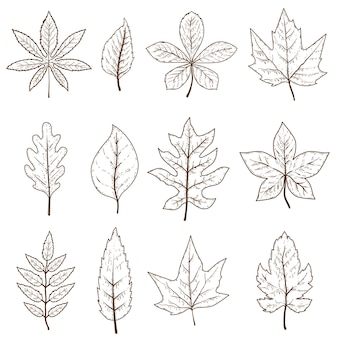 Ensemble de feuilles d'automne isolé sur fond blanc. élément