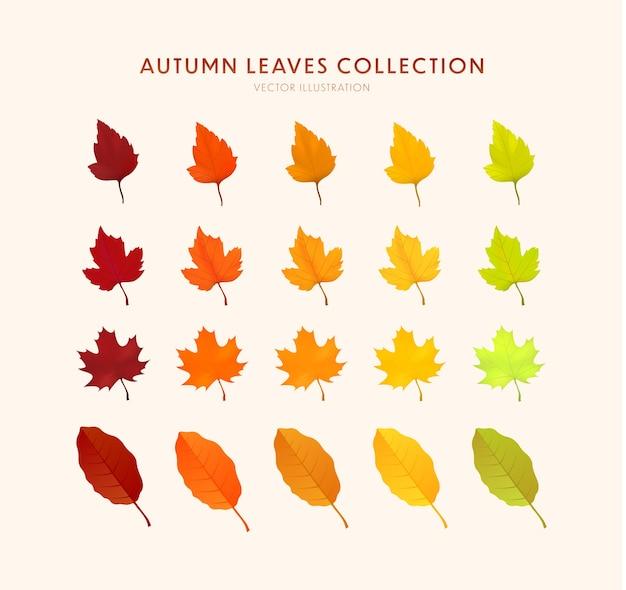 Ensemble de feuilles d'automne réalistes lumineuses