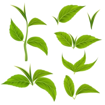 Ensemble de feuilles et de branches vertes réalistes tiges d'arbres 3d vectorielles pour produits bio et sains