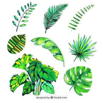 Ensemble de feuilles dans un style aquarelle