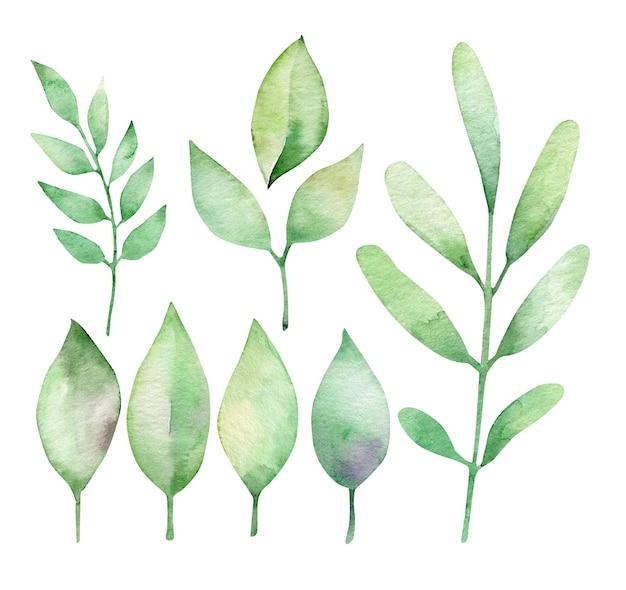 Ensemble de feuilles décoratives aquarelle