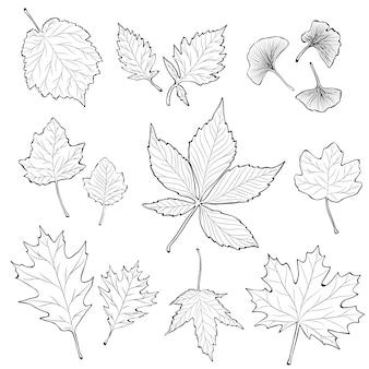 Ensemble de feuilles dessinées à la main