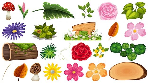 Ensemble de feuilles et de fleurs isolées