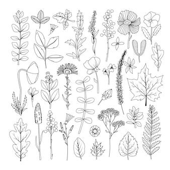 Un ensemble de feuilles et de fleurs séchées pour l'herbier. dessin au trait