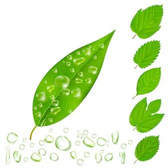 Ensemble de feuilles fraîches avec gouttes d'eau
