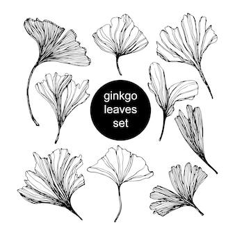 Ensemble de feuilles de ginkgo biloba dessinés à la main