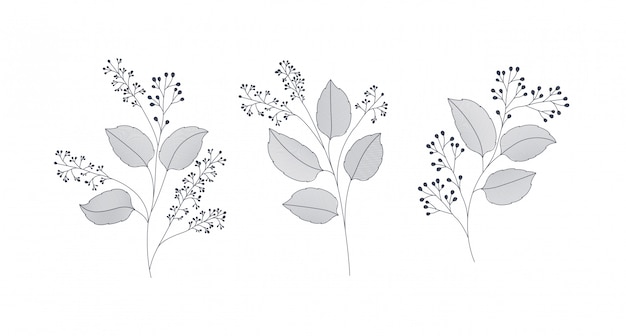 Ensemble de feuilles de laurier monochromes