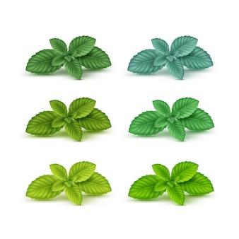 Ensemble de feuilles de menthe menthe poivrée menthe poivrée isolé sur blanc
