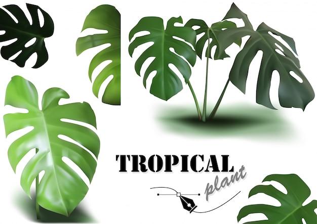 Ensemble de feuilles de monstera tropical - illustrations de plantes photoréalistes et détaillées