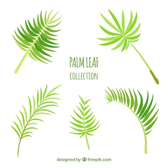 Ensemble de feuilles de palme décoratives