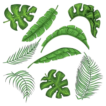 Ensemble de feuilles de palmier tropical, collection de feuilles de bananier de la jungle