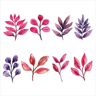 Ensemble de feuilles roses et violettes fraîches