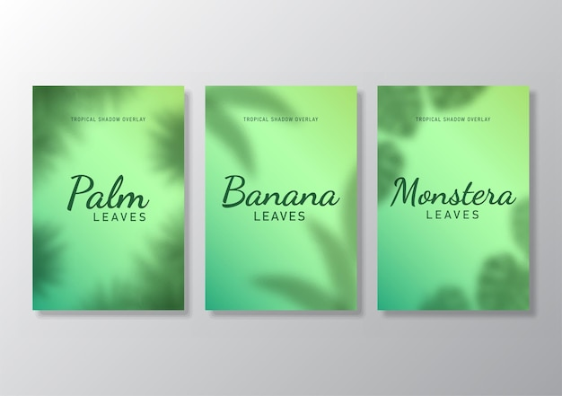Ensemble de feuilles tropicales affiche ombre superposition fond illustration vecteur
