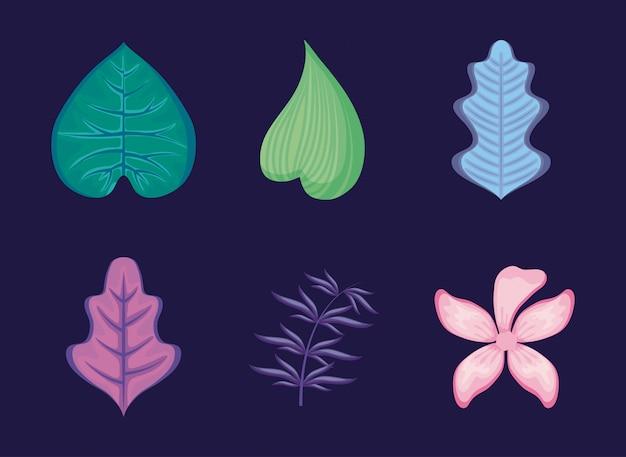 Ensemble de feuilles tropicales et de fleurs