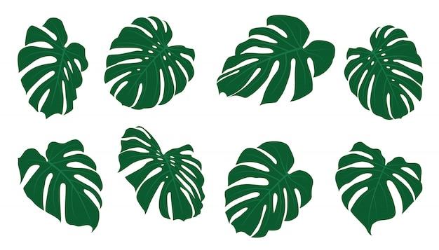Ensemble de feuilles tropicales. illustration