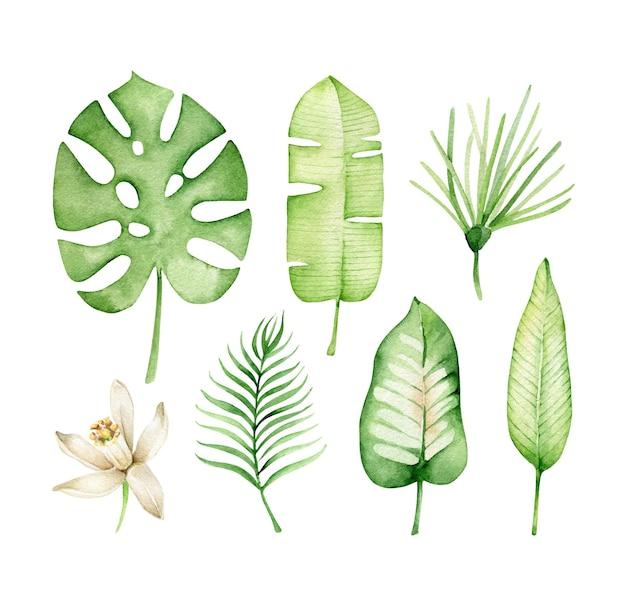 Ensemble de feuilles tropicales isolé sur blanc