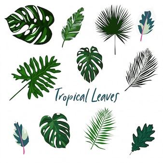 Ensemble de feuilles tropicales isolé