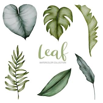 Ensemble de feuilles vertes aquarelle sur blanc