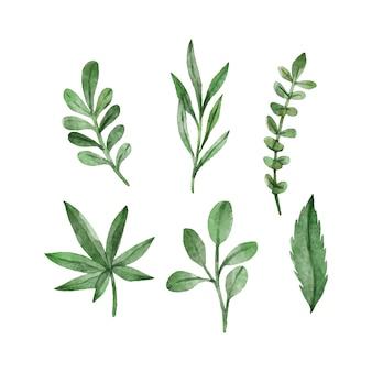 Ensemble de feuilles vertes aquarelle