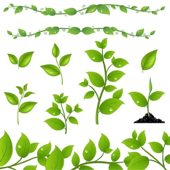 Ensemble de feuilles vertes et pousses, isolé sur fond blanc,