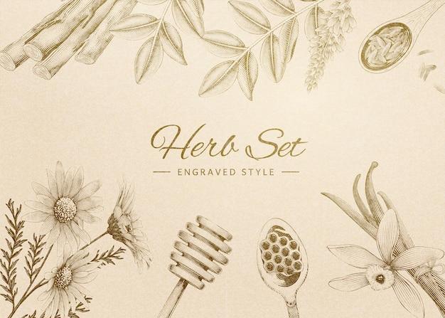 Ensemble de fines herbes gravé de style rétro sur fond beige