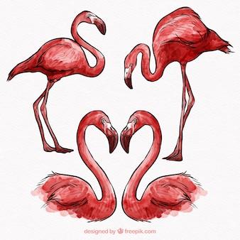 Ensemble de flamants roses dans différentes postures