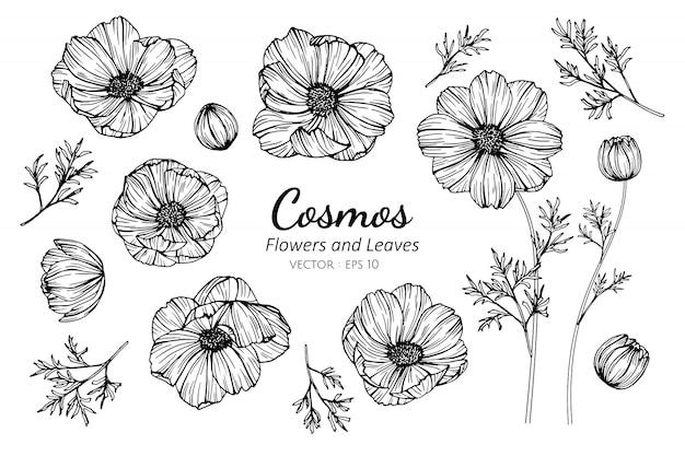 Ensemble de fleur de cosmos et feuilles dessin illustration.