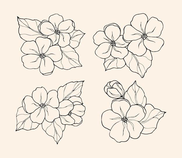 Ensemble de fleur de jasmin de croquis