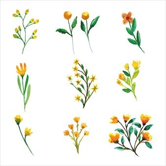 Ensemble de fleur jaune sauvage et aquarelle de feuilles de printemps pour carte de voeux