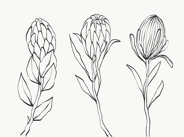 Ensemble de fleur de protéa et ligne de feuilles tropicales sur fond blanc. cadeau de vacances, bouquet, bourgeons. une belle photo macro de fleur de mode. conception d'illustrations vectorielles.