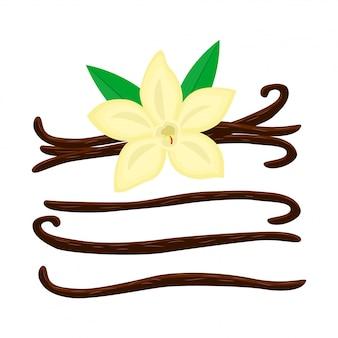 Ensemble de fleur de vanille de dessin animé avec illustration de différents bâtons de vanille isolé sur blanc