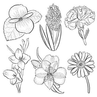 Ensemble de fleurs alstroemeria, bégonia, oeillet, gerbera et glaïeul, jacinthe en style dessiné à la main isolé